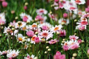 Co robić, by cieszyć się pięknym ogrodem?